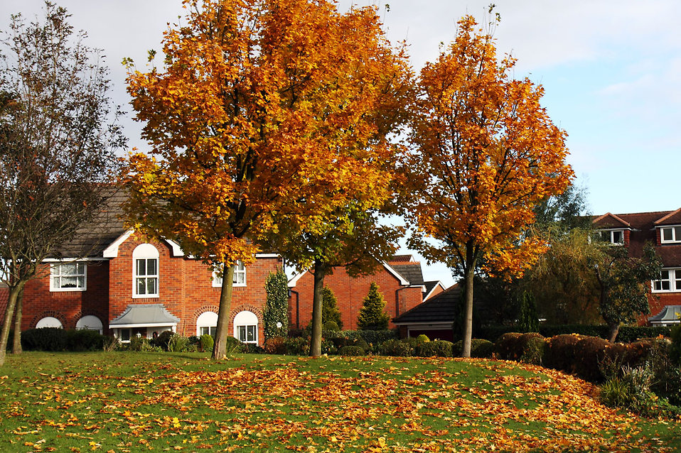 Fall Can Still Be a Great Time to Buy or Sell Real Estate in Windsor & Essex County