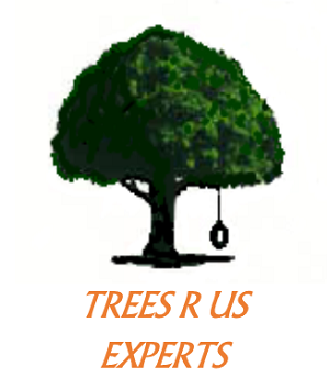 TREES R US EXPERTS